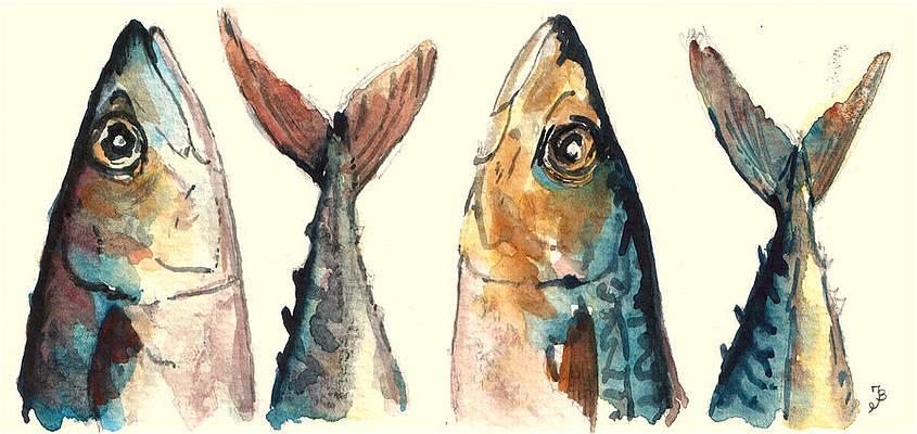 mackerel-fishes-juan-bosco